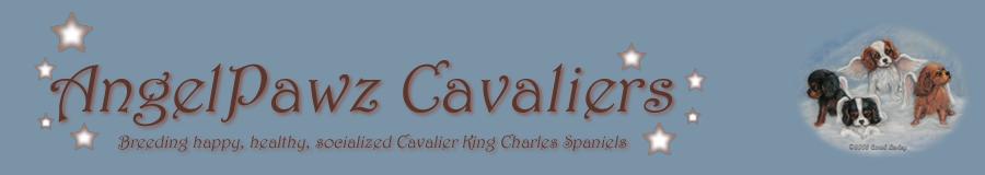 AngelPawz Cavaliers