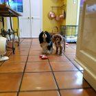 Petunia and Lucca