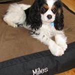 Miles S.