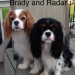 Brady and Radar