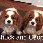 Chuck and Cooper